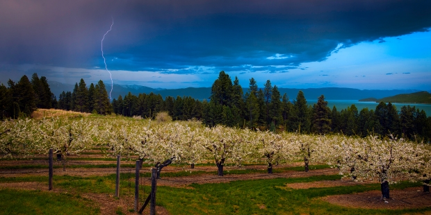 cherry orchard storm