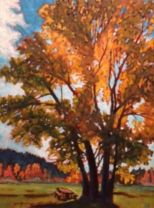 Susan Fletcher Cottonwood Illuminated