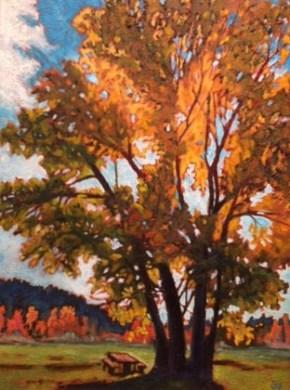 Susan Fletcher Cottonwood Illuminated